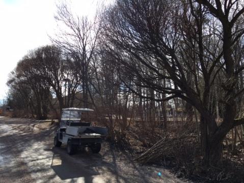 Skötselområde_fälla_träd