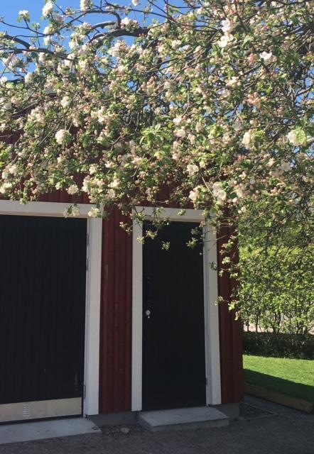 Äppelblom_garaget_