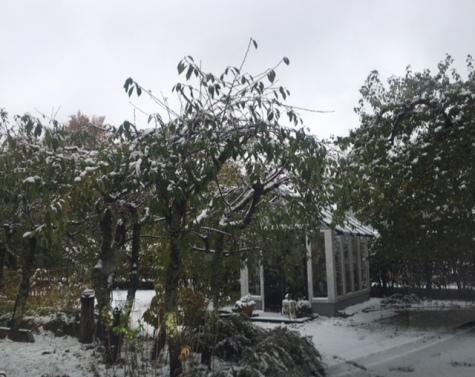 26.10.17_Växthus_snö
