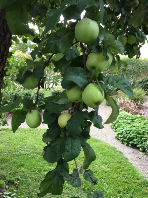 Äppel_310818